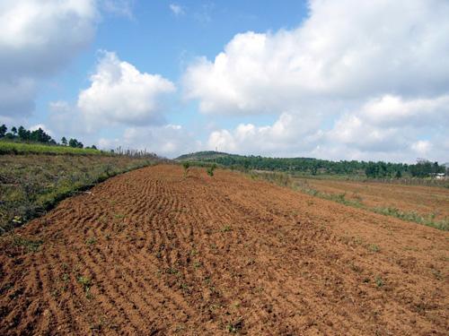 2019年全国耕地质量等级情况公报发布
