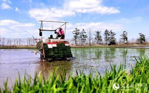 黑龙江省春播比去年同期快 水田插秧已超八成