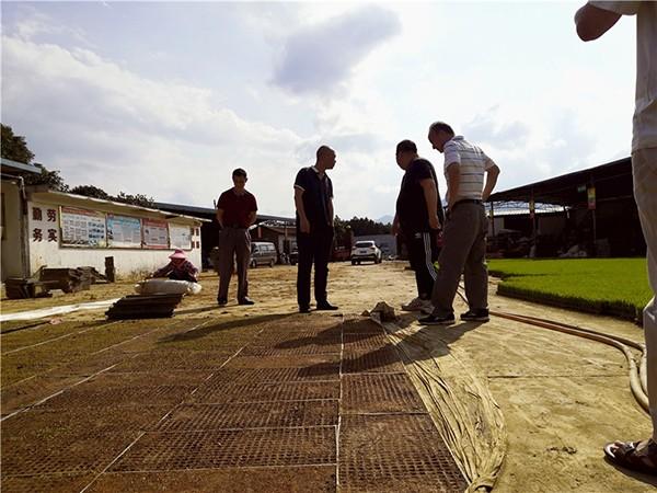 水稻大钵体毯状苗机插秧技术助力农业节本增产