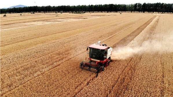 河南:夯实粮食生产能力基础