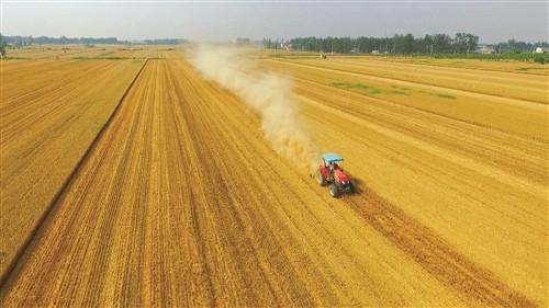 全国政协委员程永波: 培育粮食产业主力军