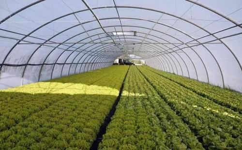 辽宁省2020年计划新增设施农业10万亩