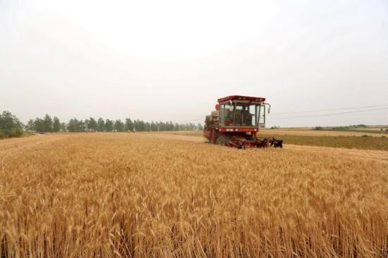 200万台!河北省将适时投入农机展开三夏作业