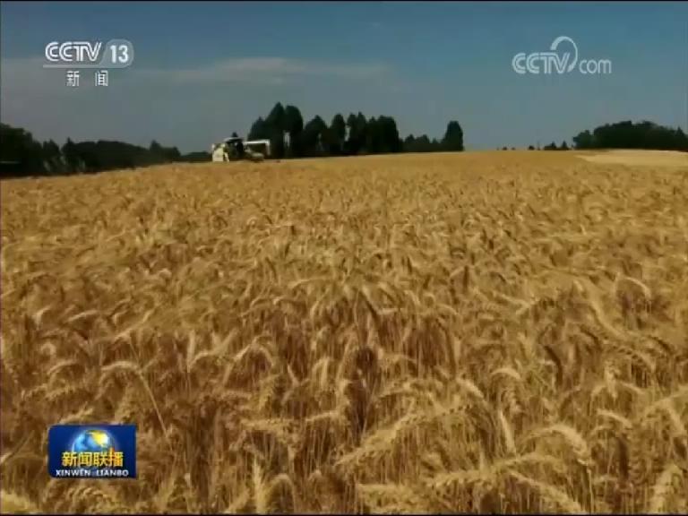 央视《新闻联播》:全国夏粮陆续开镰 长势好于常年