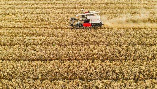 [两会观察] 人大代表池建美:农机购置补贴要及时兑现给农民