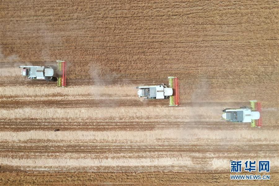 【图文】夏粮主产区河南小麦陆续收割