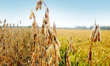 湖北省当前粮食抗旱生产技术指导意见