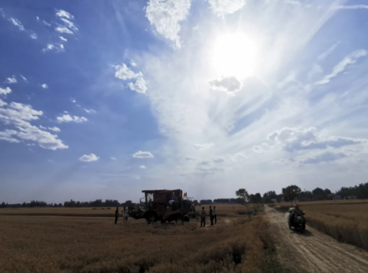 征战三夏,收获未来——东方红柴油机麦收会战纪实