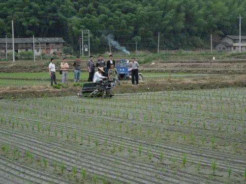 江苏小麦机收基本结束,水稻机插全面展开