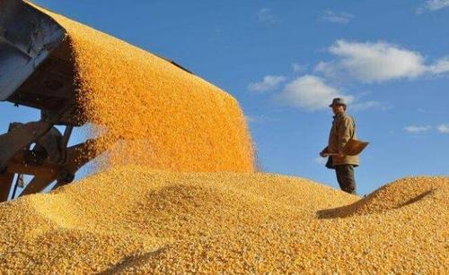 保障粮食安全的关键是稳粮价