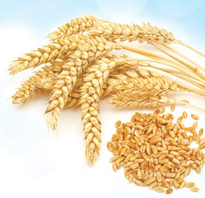 促进农业生产,共同维护粮食安全