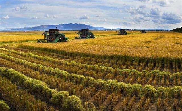 湖北省2020年油菜轮作试点工作技术指导意见