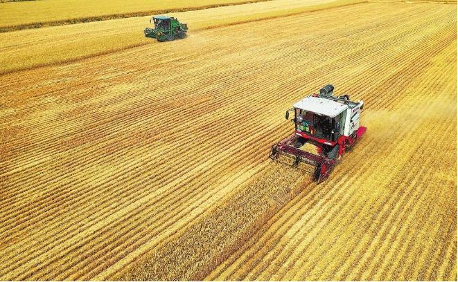 把握住粮食安全主动权(一线视角)