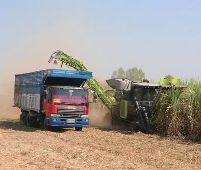 破解甘蔗机收难题需要整体方案