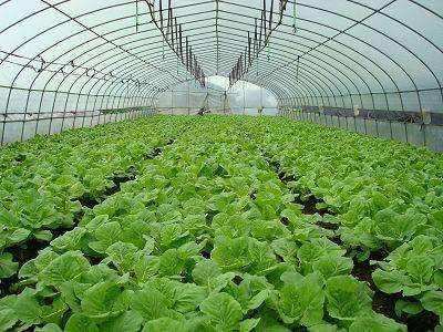 吉林省关于印发夏季蔬菜生产防灾减灾自救技术指导意见的通知