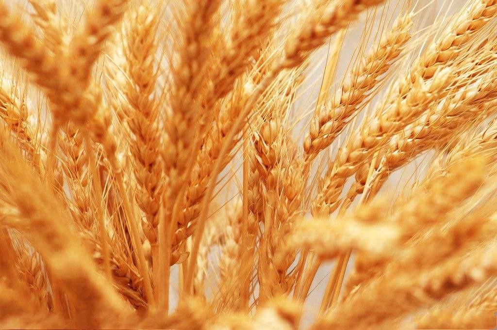 農業農村部召開全國秋冬種工作視頻會議強調抓好秋冬生產夯實明年夏季糧油豐收基礎
