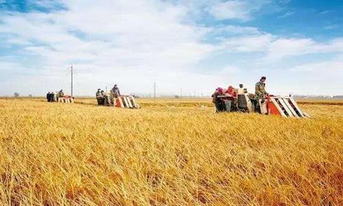 海南省農業農村廳 海南省財政廳關于印發2020年農業生產發展項目資金實施方案的通知