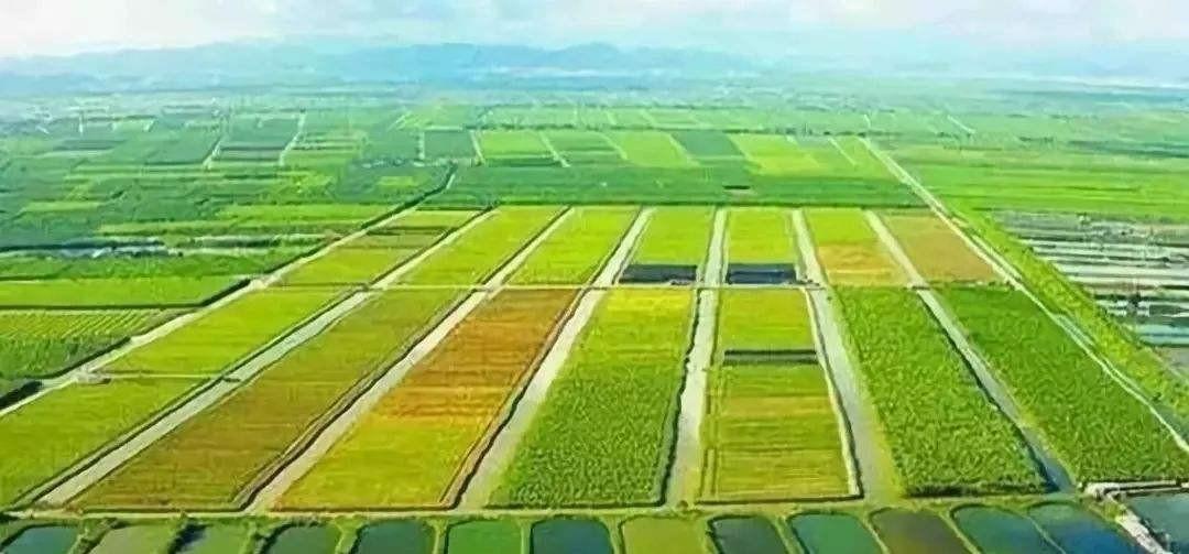 农业农村部:大力推广农业生产托管服务