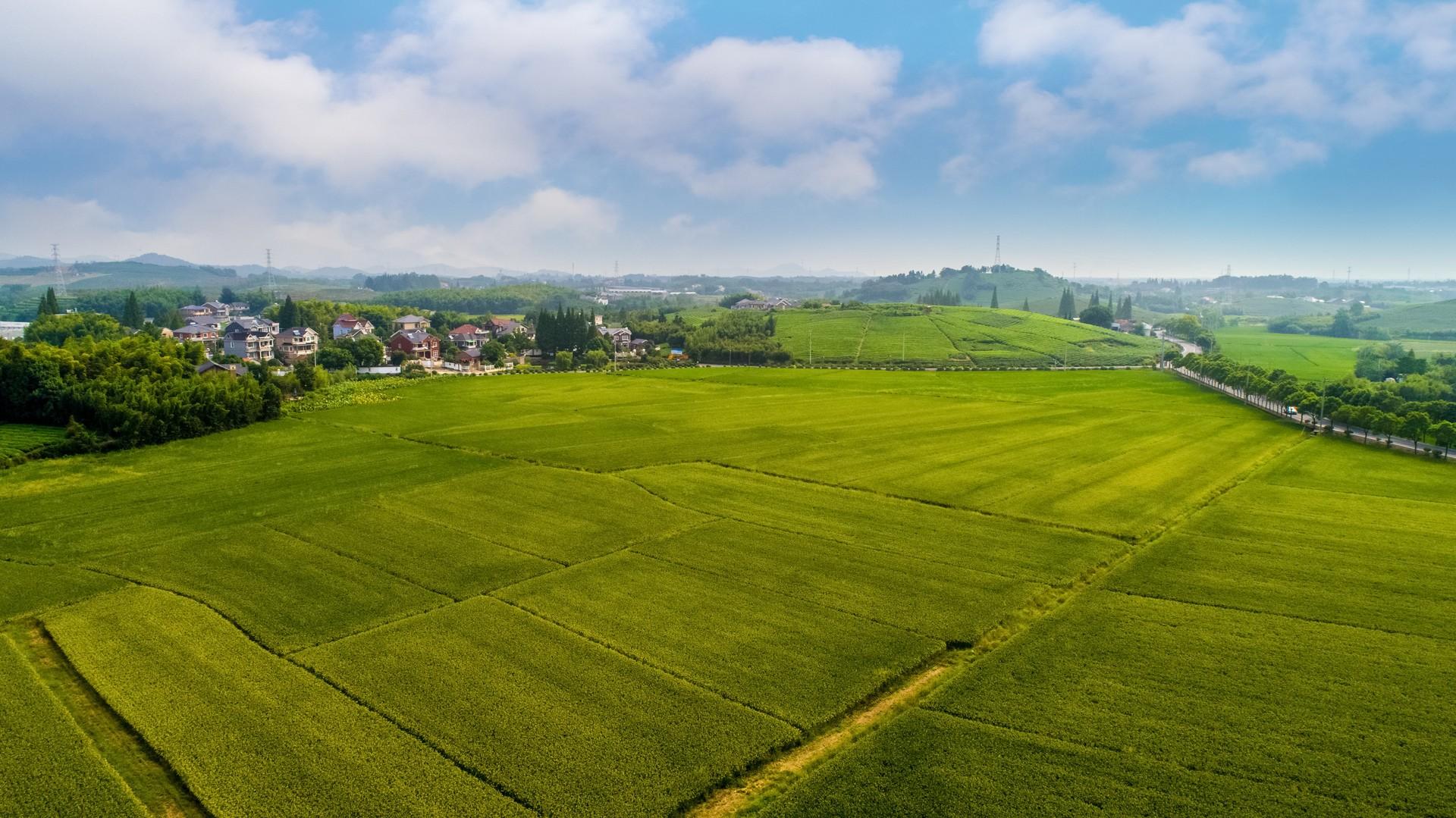 农业农村部:逐步完善土地流转扶持政策