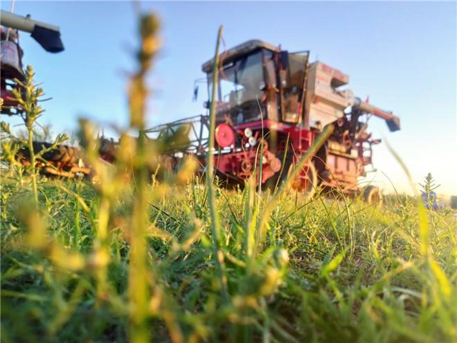 99年农机手隗小孬:年少时的梦想在田野绽放