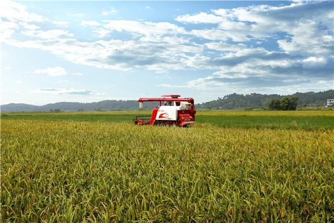从五方面着力推进农业农村现代化
